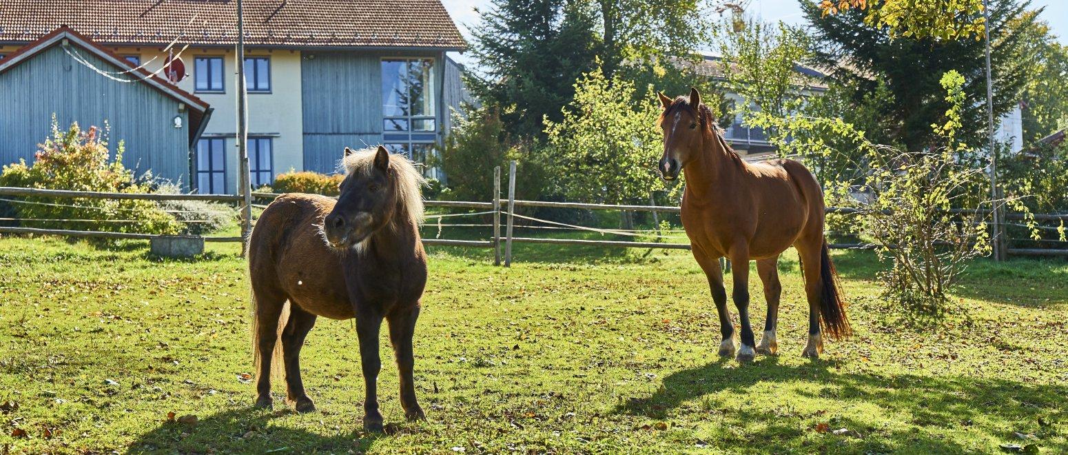 breitbilder-binder-bauernhofurlaub-tiere-pferde-reiten-1550